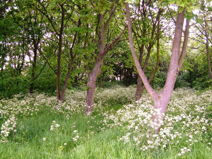 An unexpected woodland between the two locks into the East India Basin
