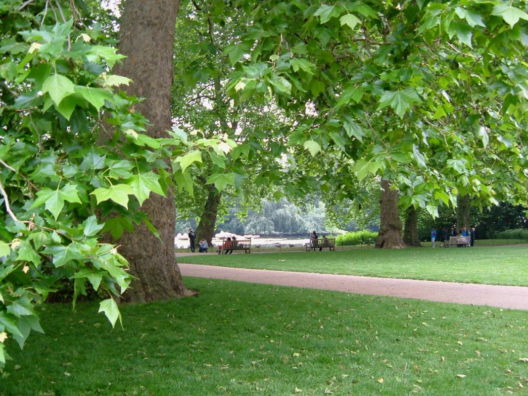 Under the trees in St james's Park
