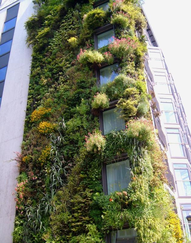 The Athenaeum, the Living Wall