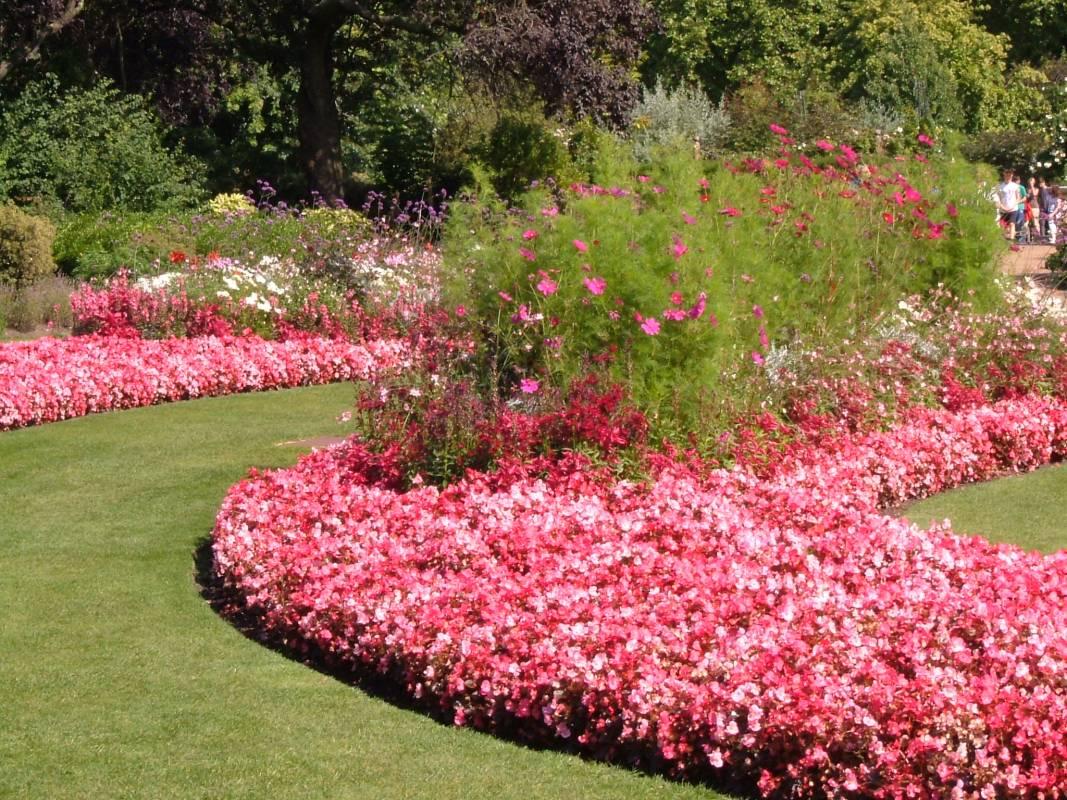 Formal planting in Hyde Park