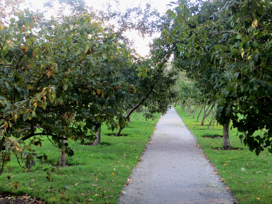 The avenue of apple trees inside the Walled Garden, Fulham Palace