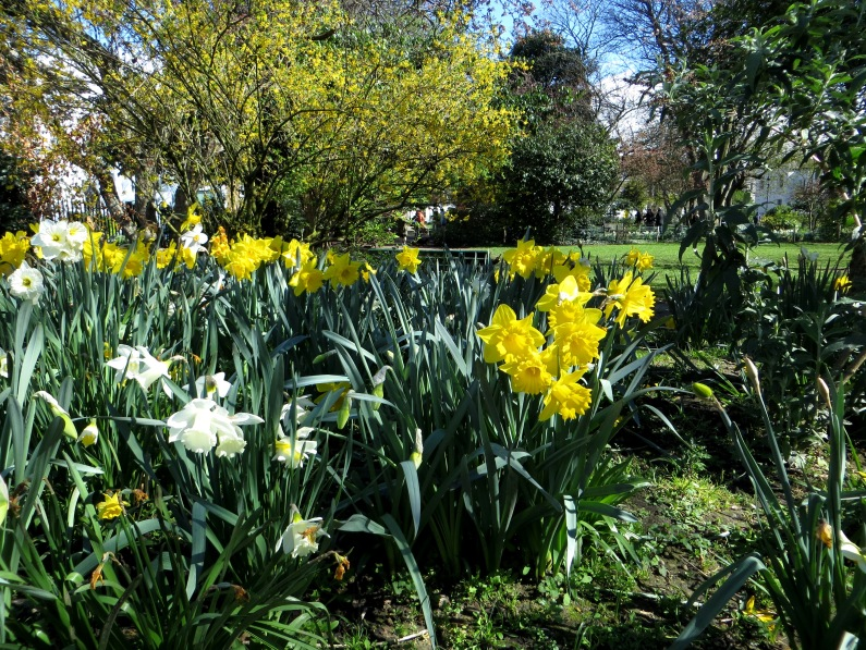 Barnsbury Square gardens in spring