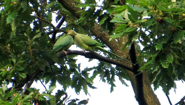 Exotics in Greenwich Park