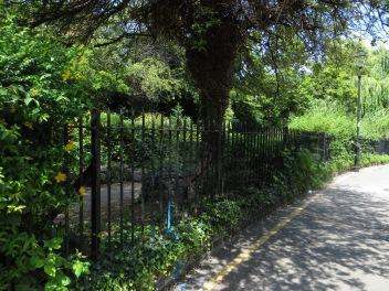 Astey's Row Rock Garden