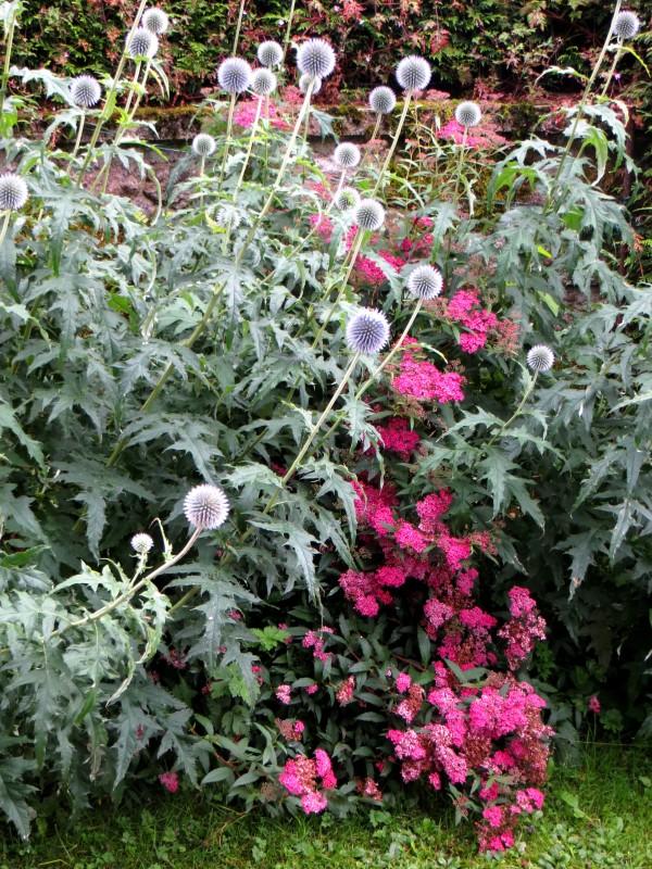 Flowers in Barsanges