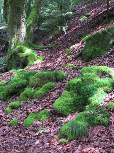 Moss-covered hillsides