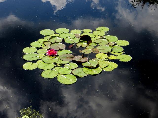 IN the village pond, Chauzeix
