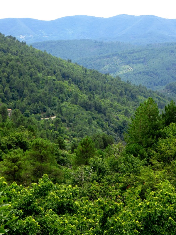 The Cevennes hills from the Col du Baraque