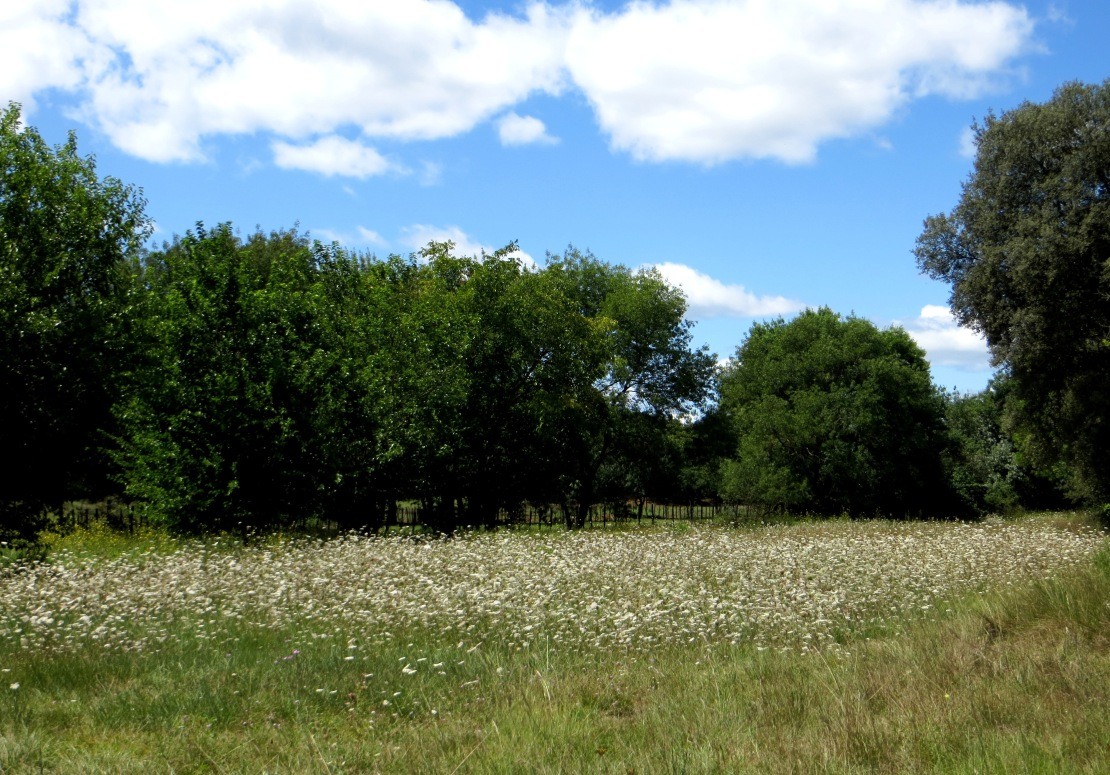 A water meadow just before AiguesBelles