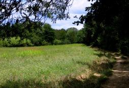 'Water meadow' alongside the Crieuolon River