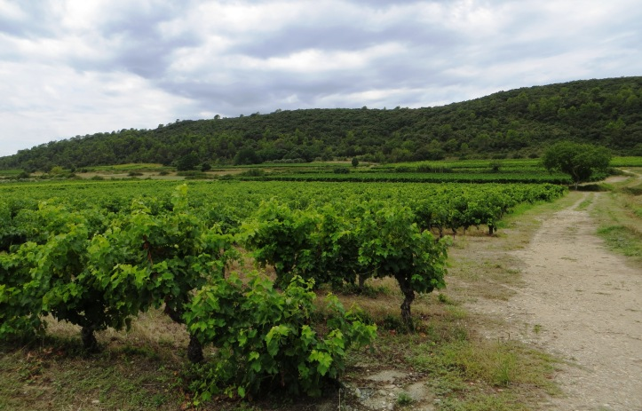 Vineyards south of Corconne