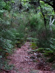 The path to Ste Croix from the car park
