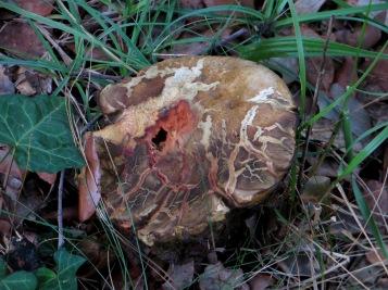 'Mushroom'