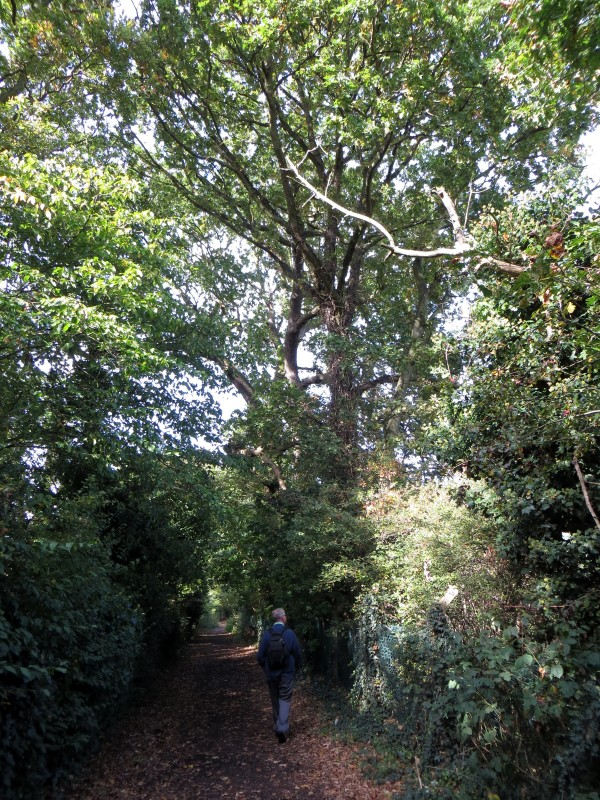 Carr's Lane