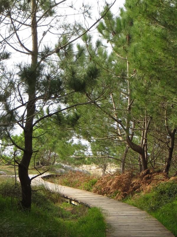 Walkway through the dunes, Corrubeda Natural Park