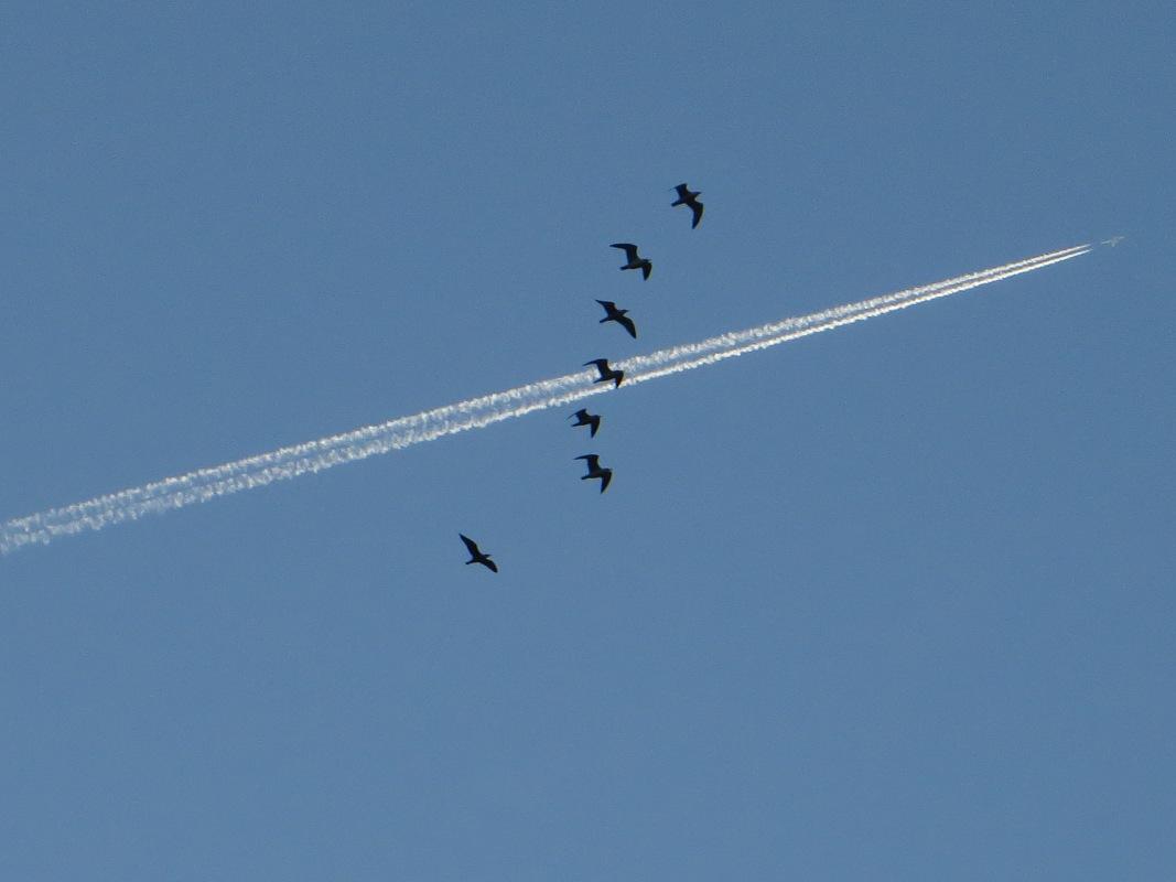 Birds over the Minho River
