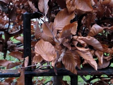 Tabard Gardens