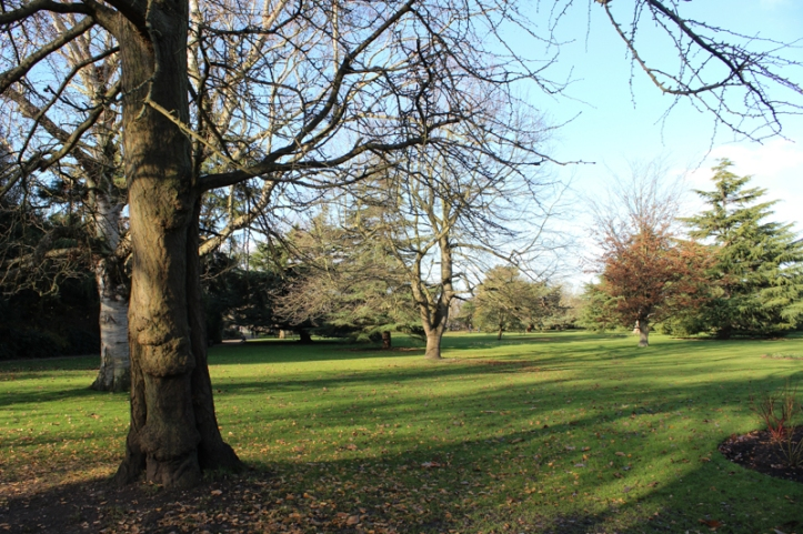 Greenwich Park on Christmas Day