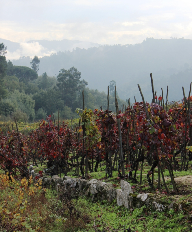 The hills above Leira, in Ribeiro wine country