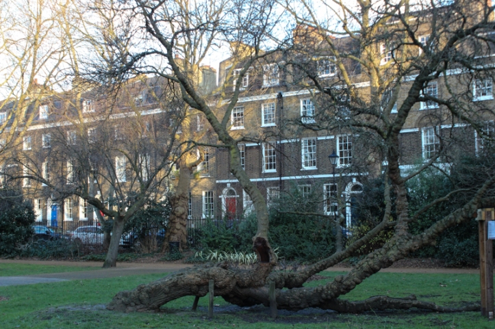 A view of West Square with one of the mulberry trees in the square