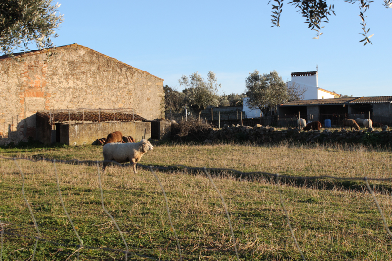 Smallholding on the edge of Flor da Rosa