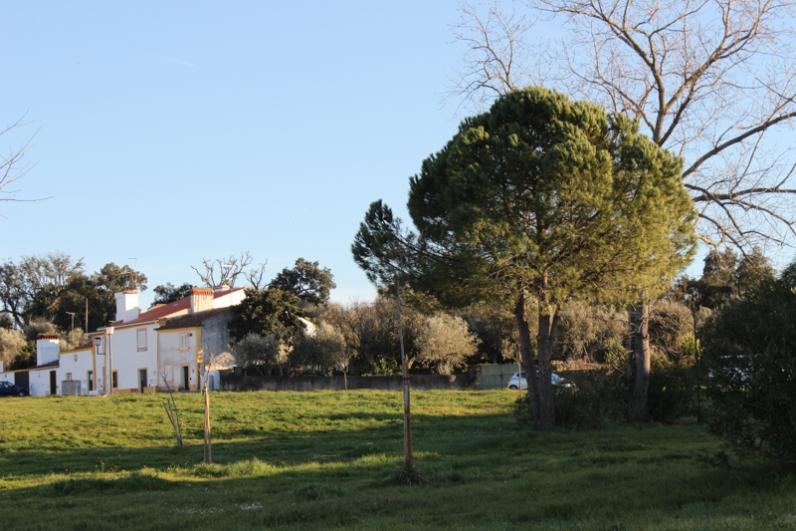 The village green, Flor da Rosa