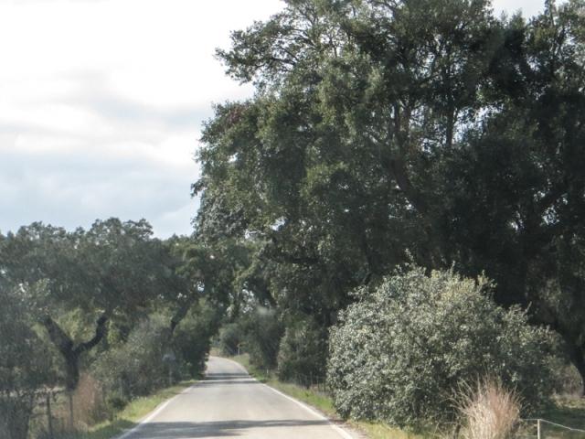 Between Avis and Ponte de Sor