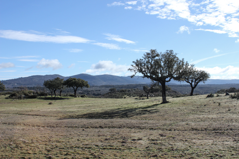 Countryside between Flor de Rosa and Castelo do Vide
