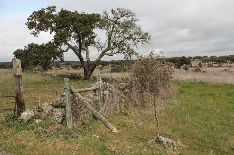 Countryside around Flor da Rosa