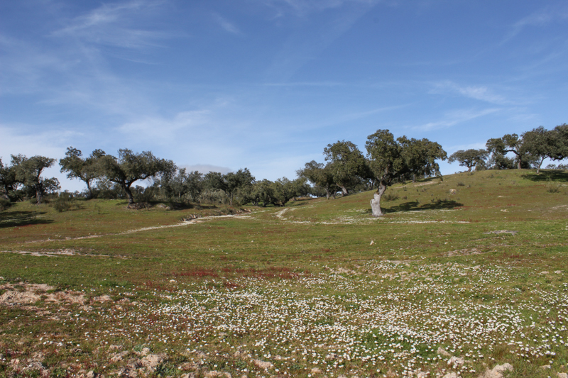 Portugal 2015 Day 4, LR-7187