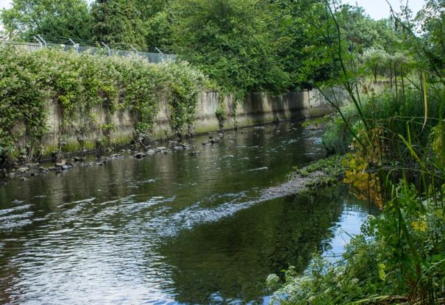 The Ravensbourne River in Brookmills Park