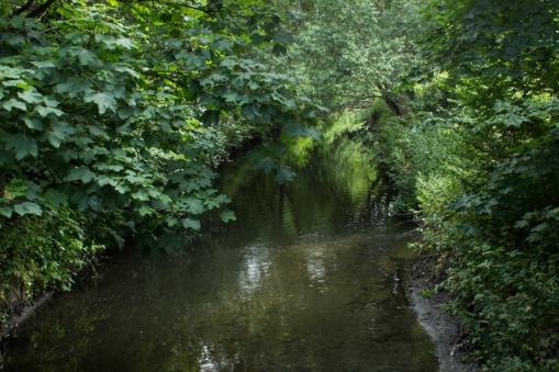 The Ravensbourne in Ladywell Fields