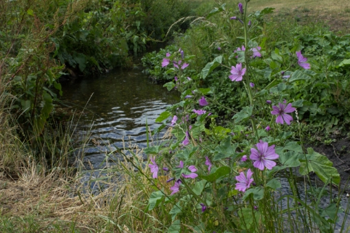A stream into the Ravensbourne, Ladywell Fields