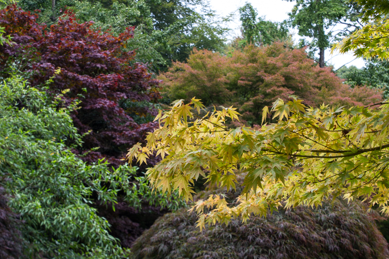 Early autumn colours in the Japanese Garden