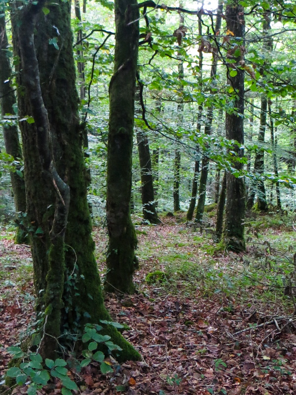 The Cranou Forest