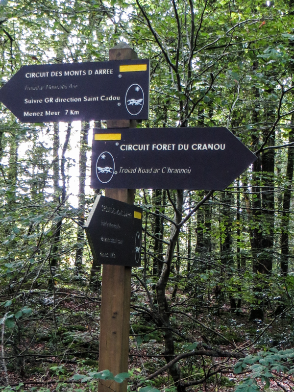 The Forest of Cranou