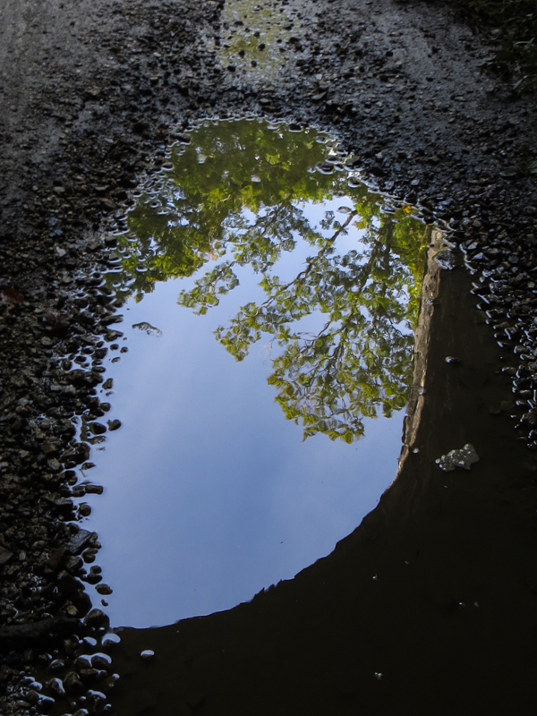 Reflections under the railway bridge in the Forest of Cranou