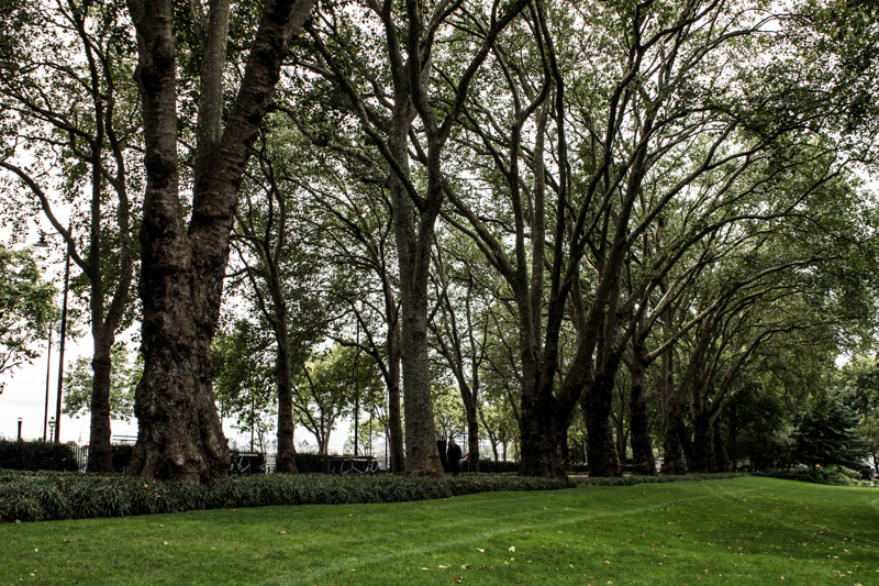 The plane trees of 1870 along the Embankment