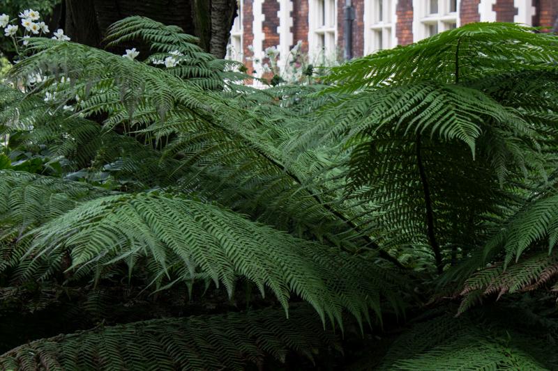 Tree fern?