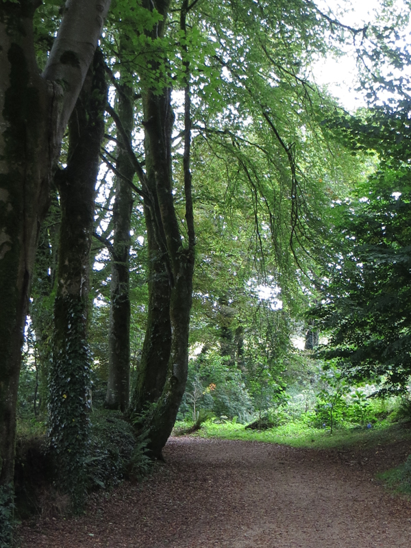 Avenues of trees and green lanes around Le Relecq
