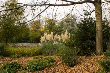 The Lake, Battersea Park