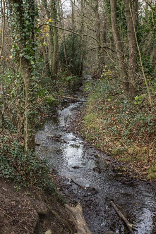The Ravensbourne in Scrogginhall Wood