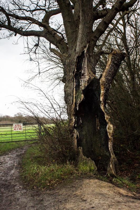The beginning of Brook Wood