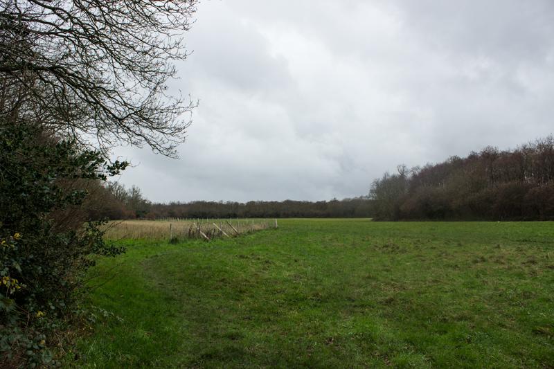 Barnet Woods