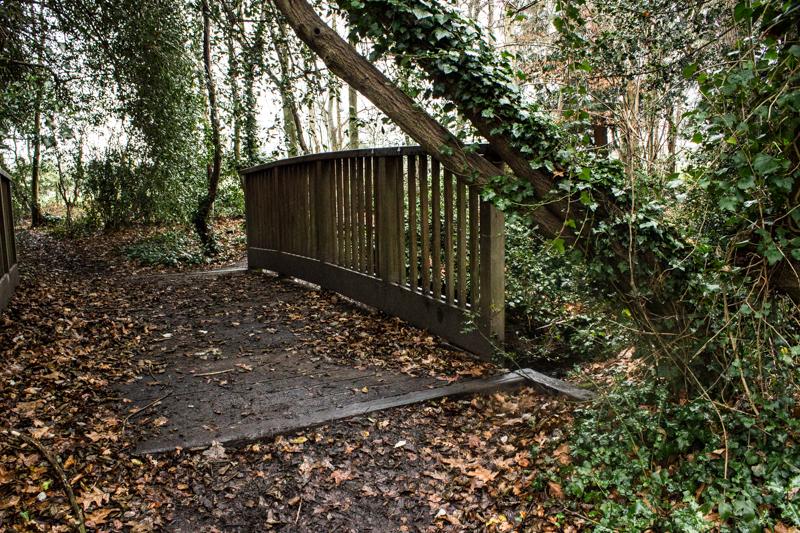 The Ravensbourne, hidden in Barnet Woods