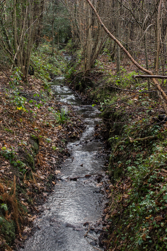 The Ravensbourne in Padmall Woods