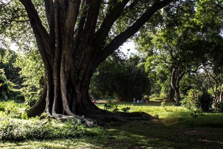 Durban Botanic Gardens