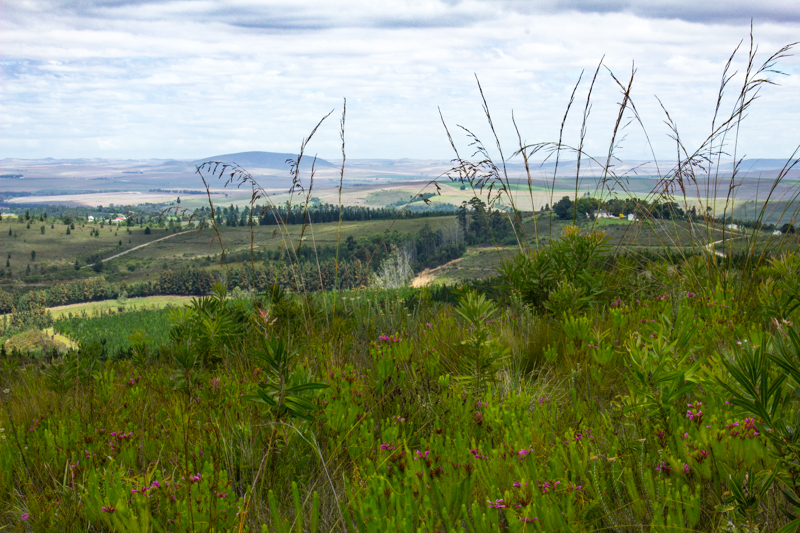 Looking out over Swellendam from the Marloth Nature Reserve