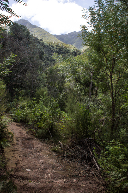 The path into the indigenous forest at the Duilwelskloof Waterfall