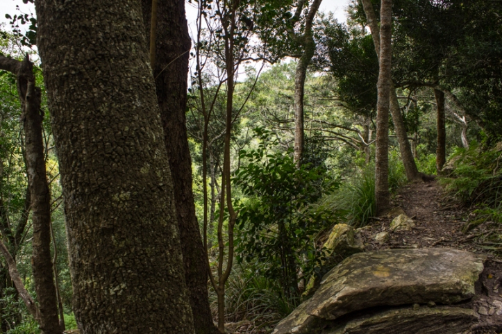 The path in the indigenous forest, Marloth